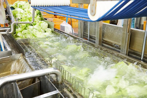 Máy rửa rau tự động